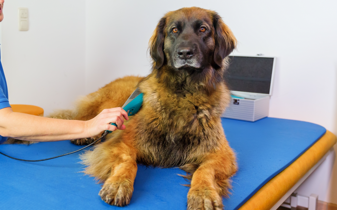 Laser Therapy $35